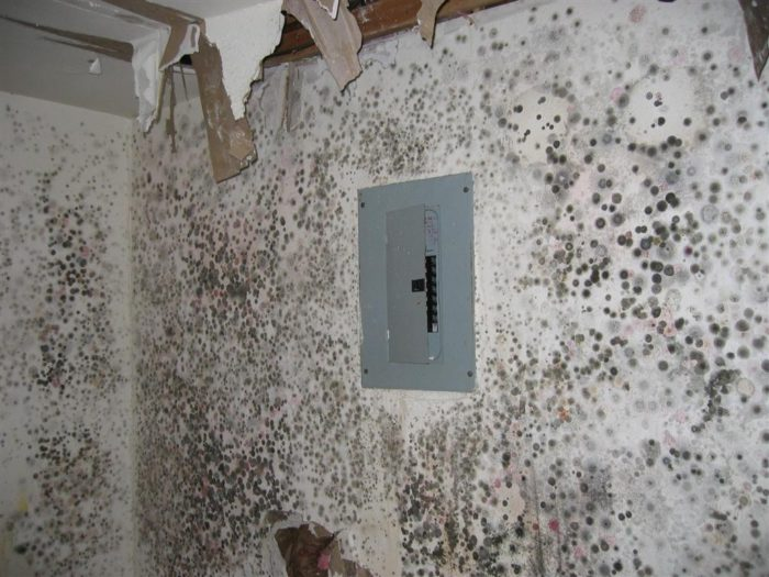 Miami Restoration Home Service Servpro, water damage restoration, fire damage restoration, mold remediation inspection- 65-We do home restoration services like Servpro such as water damage restoration, water removal, mold removal, fire and smoke damage services, fire damage restoration, mold remediation inspection, and more